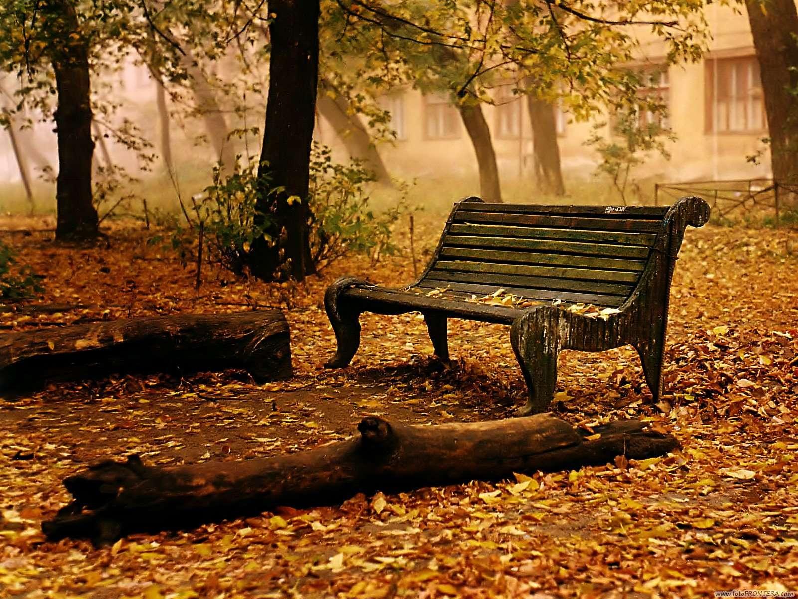 banco abandonado en el parque